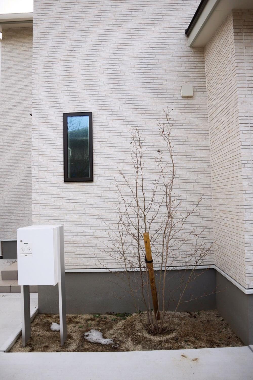冬は寂しい雰囲気があるシャラの木