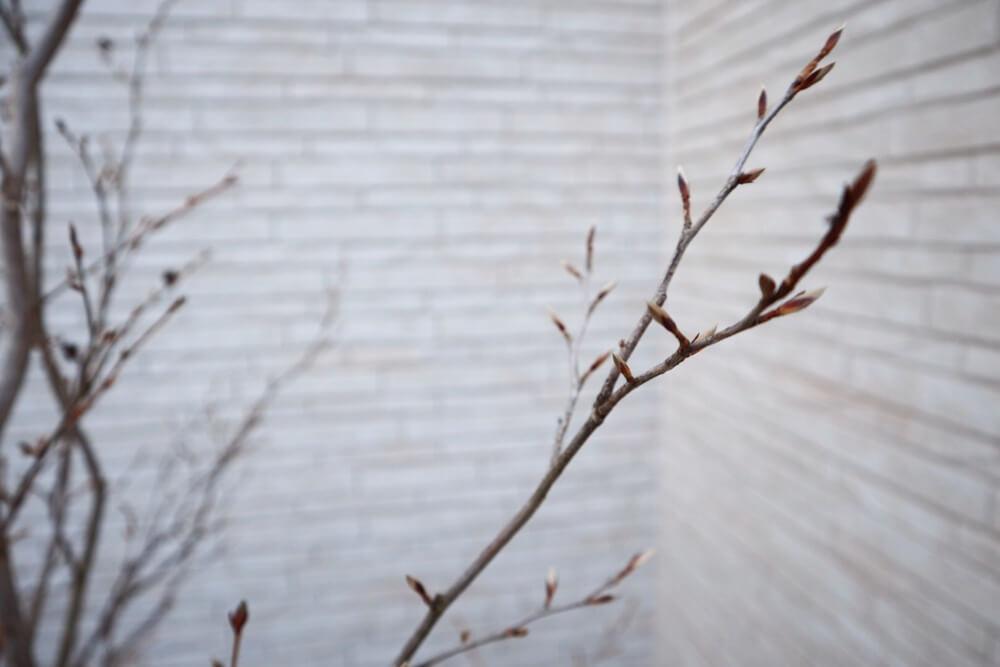 葉っぱが全て落ちたシャラの木の枝